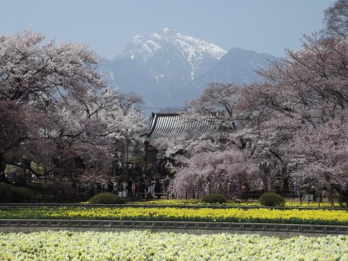 iwata401.jpg